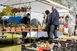 Cactussen groot en klein op de markt/foto Jeroen Sloot